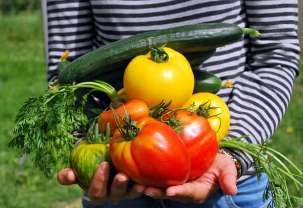 Best fruits and vegetables to grow at home