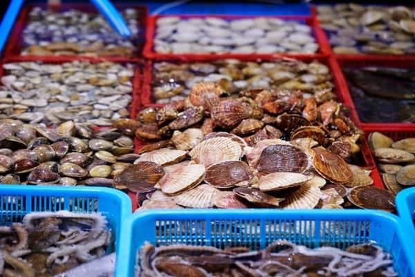 scallop market