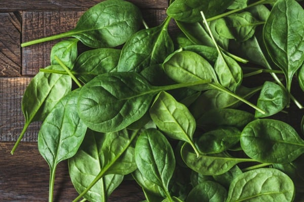 baby spinach leaf as a background