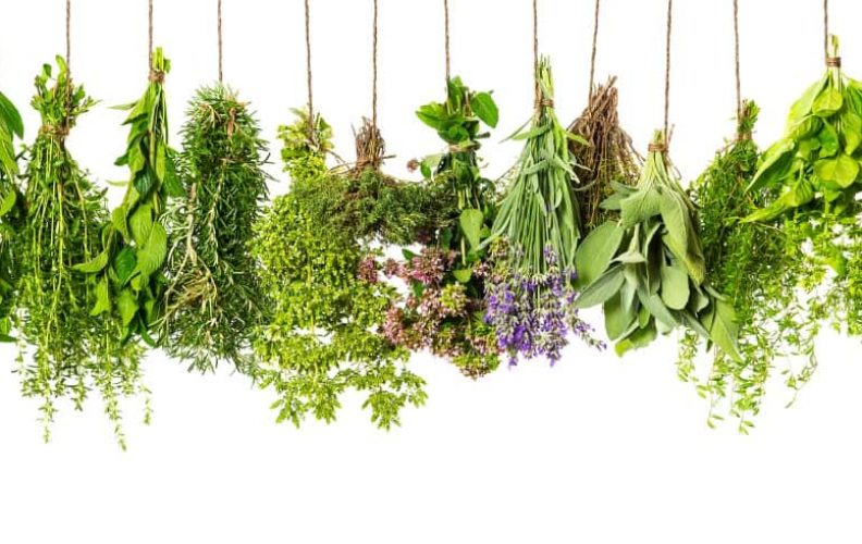 fresh herbal recipes