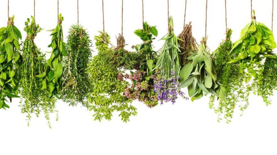 fresh herbal recipes