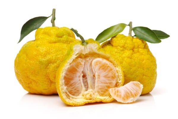 ugli fruit on white background